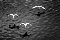 Cisnes Praga 2017