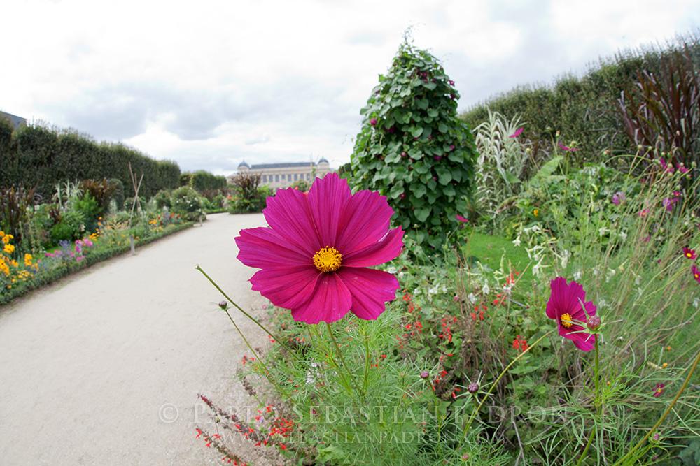 Flower 2 - France