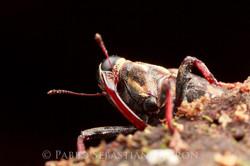 Curculionidae 5 - Ecuador