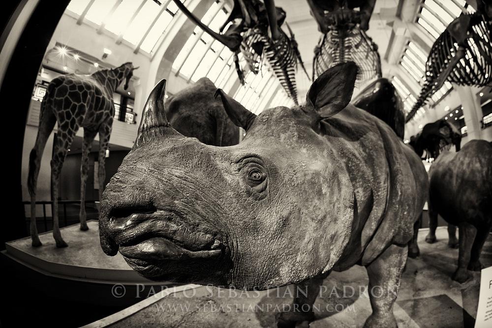 Natural History Museum 2 - UK