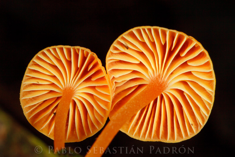 Fungi  - Ecuador