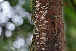 Fungi 3 -  Ecuador