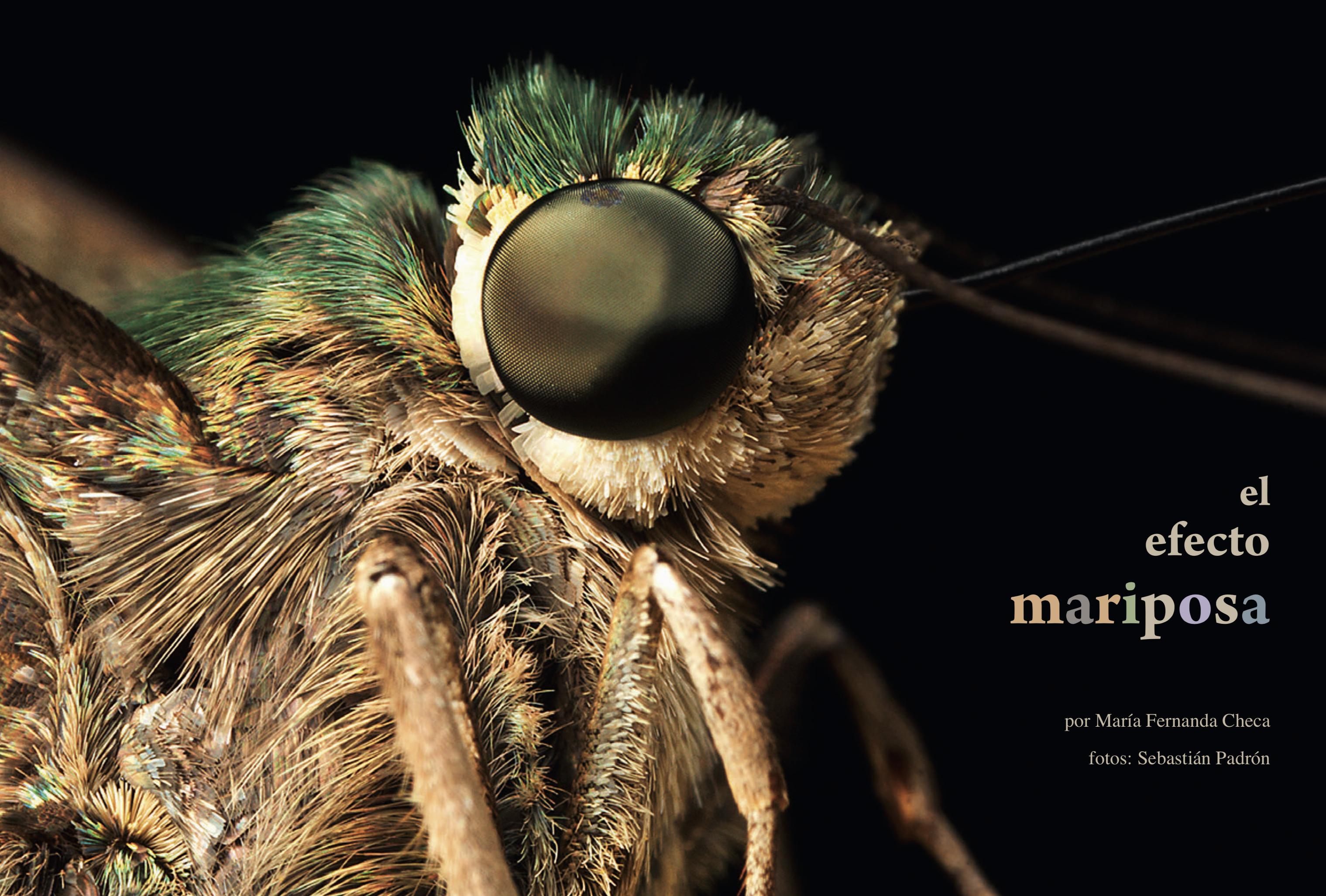 El efecto Mariposa Revista Ecuador Terra Incognita