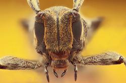 Cerambycidae 1 - Ecuador