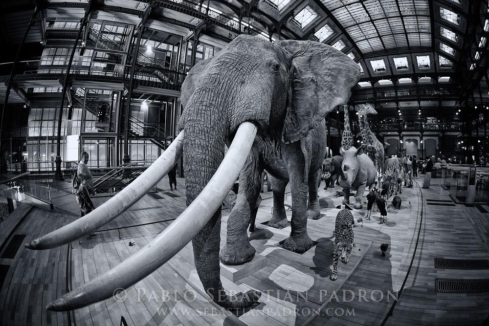 Grande Galerie de l'Evolution- Paris