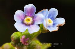 Flower 9 - Ecuador