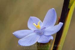 Flower 8 - Ecuador