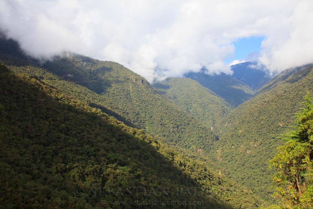 Yungas Bolivia