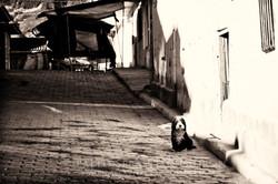 El unico habitante - Ecuador
