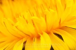 Flower 6 - Ecuador