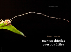 Mentes dóciles cuerpos útiles Revista Ecuador Terra Incognita
