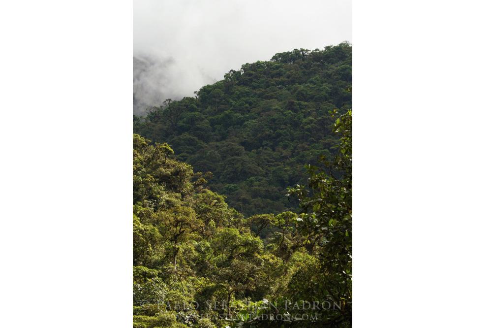 Guarumales - Ecuador