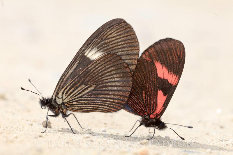 Butterflies - Ecuador