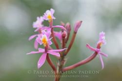 Orchidaceae -  Ecuador