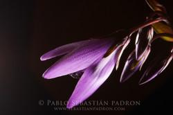 Flower 4- Ecuador