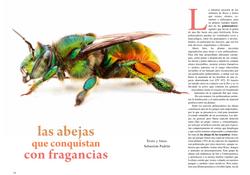 Las abejas que conquistan con. Fragancias Revista Ecuador Terra Incognita