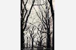 Central Park - USA