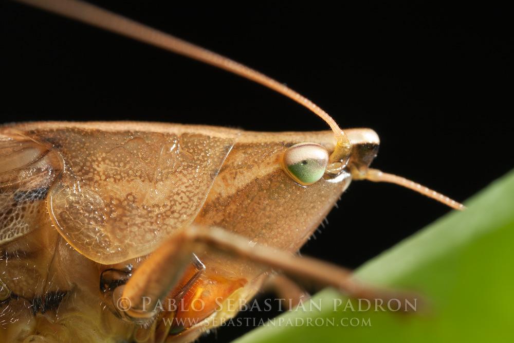 Grasshopper Gainesville