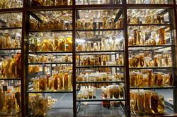 Museum fur Naturkunde 2- Berlin
