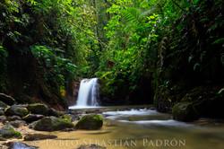 Podocarpus - Ecuador
