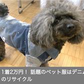 <NHK>ビジネス特集でe JEANS PETを紹介していただきました