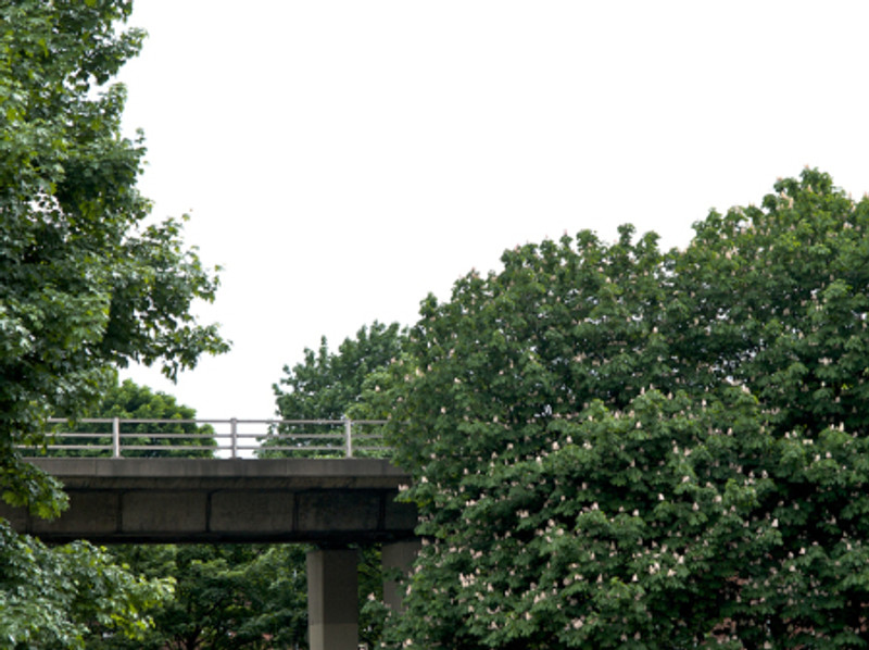 motorway in trees