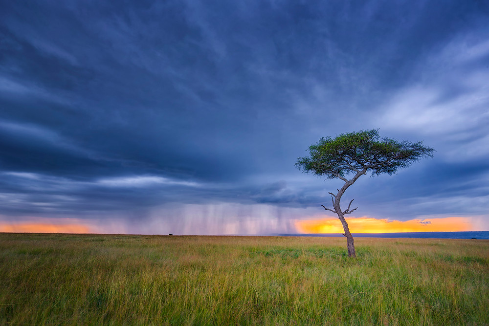 The perfect storm in Masai Mara