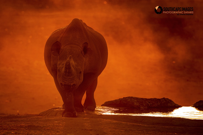 TOP 10 Images Captured on Safari since 2010