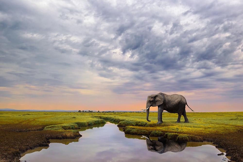 Elephant on the plains of Masai Mara