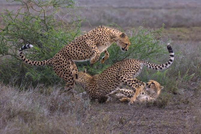2017 TOP 10 Images Captured on Safari