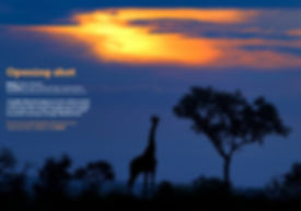 Image of a giraffe at sunset in Kruger National Park, South Africa