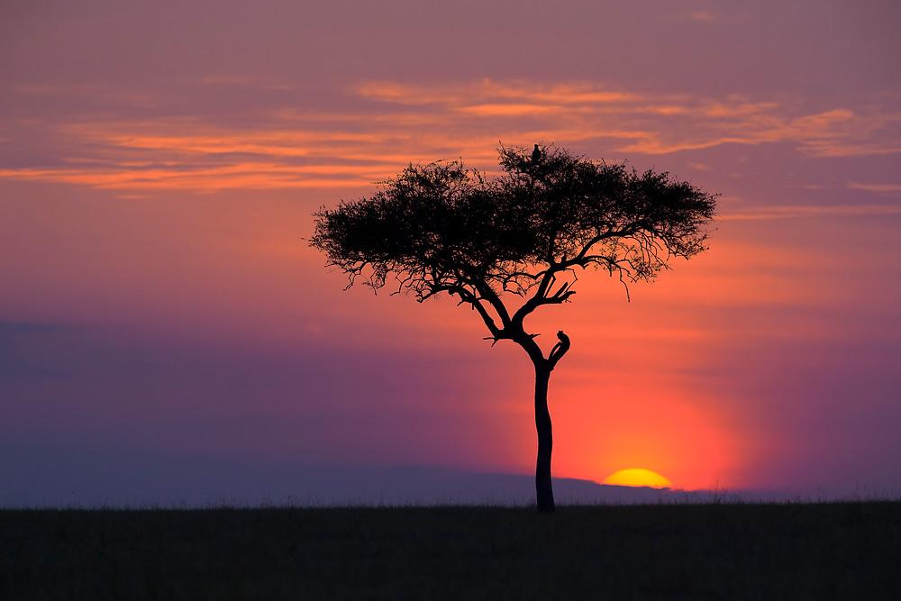 Sunrise in the Serengeti National Park, Tanzania