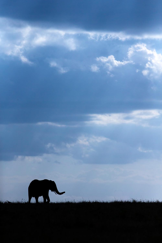 Elephant silhouette  in Masai Mara, Kenya