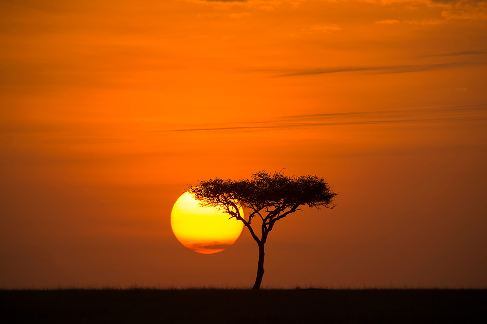 A silhouette of a tree at sunset in the Serengeti National Park, Tanzania