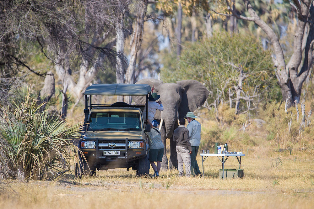 Tourists and an elephant in the Okavango, Botswana