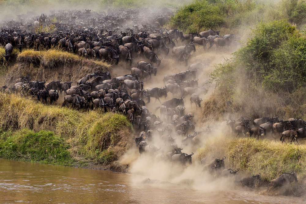 The Great Migration, Serengeti National Park