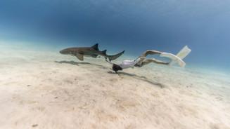 Nurse shark and free diver