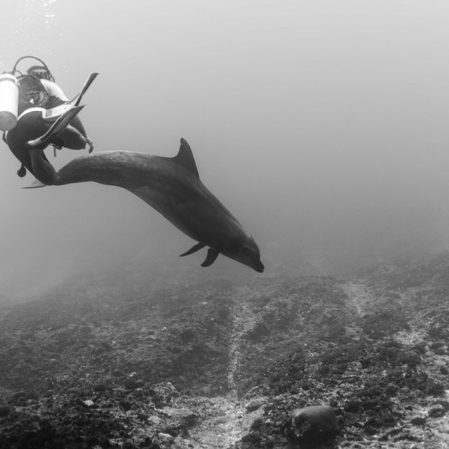 Dolphin Rangiroa