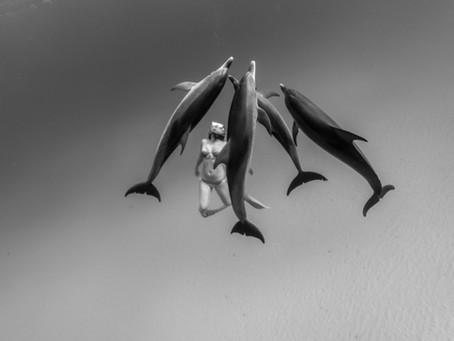 Les dauphins tachetés des Bahamas