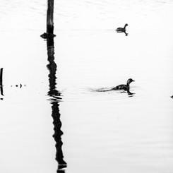 Parc ornithologique - Le Teich