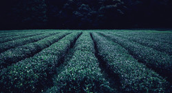 Plant rows