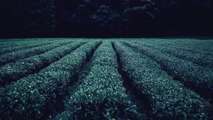 Agricultura é Poesia