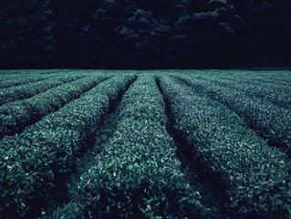 Bahasa: Greenwashing (apa artinya?)