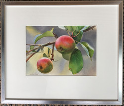 """Apples"" Water Colour Original"