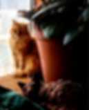 20190215_155929_HDR_edited.png