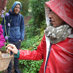 Randonnée, cueillette et découverte des plantes sauvages, avec Anne à la journée