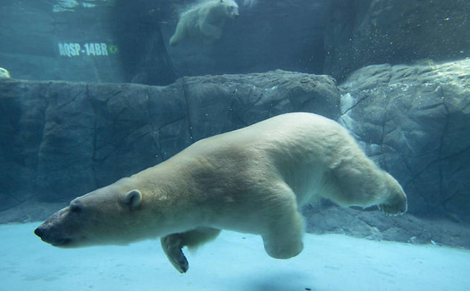 aquario-urso.jpg
