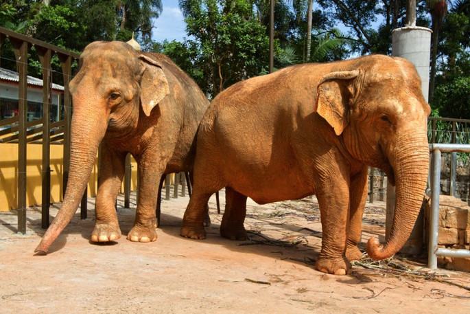 zoo-elefantes.jpg