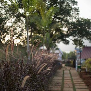 Basho Bougainvillea, Mulshi