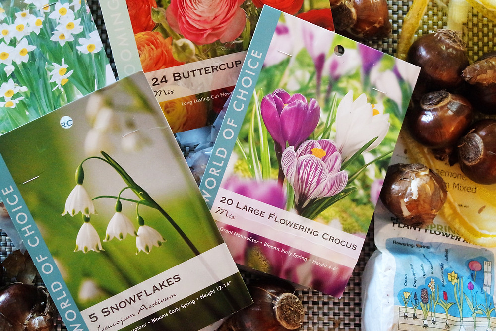 Packets of bulbs - Snowflakes, Buttercup Ranunculus, Crosuses, Narcissus, and Anemones spread out on a table with loose bulbs.